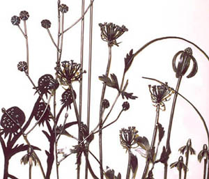 Detail - Queen Anne's Lace, Chicory, Purple and Prairie Cone Flower